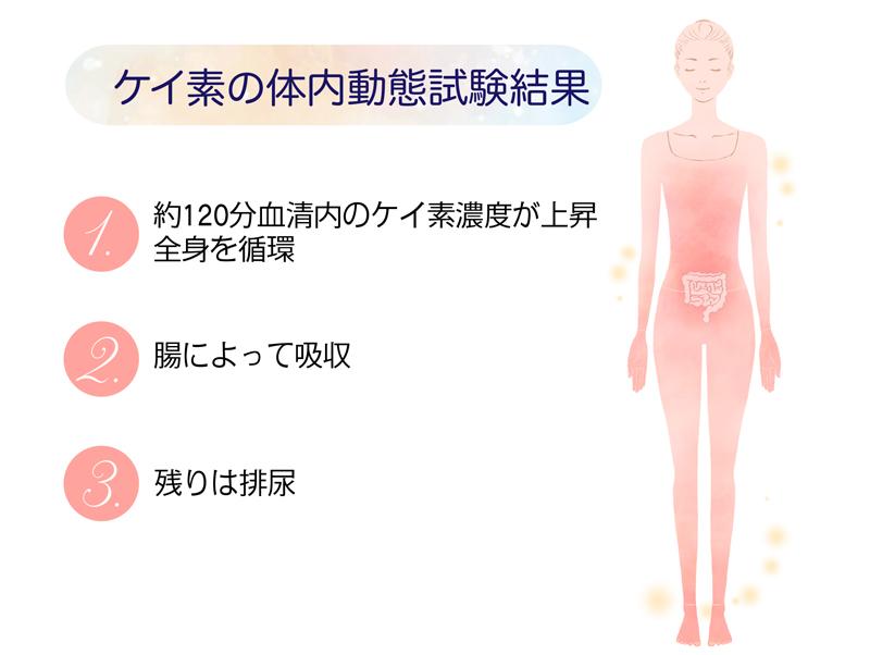 ケイ素の体内動態
